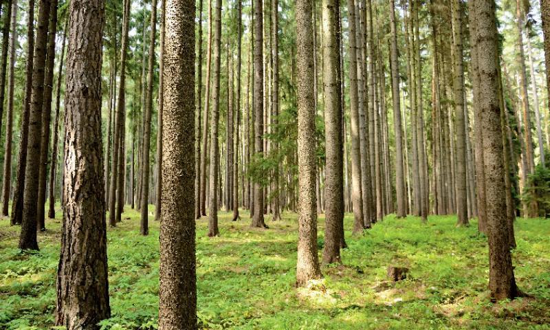 Le massif forestier des Landes