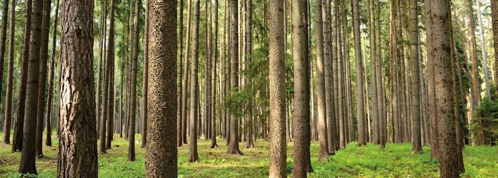 Le massif forestier des Landes comme source d'approvisionnement naturelle